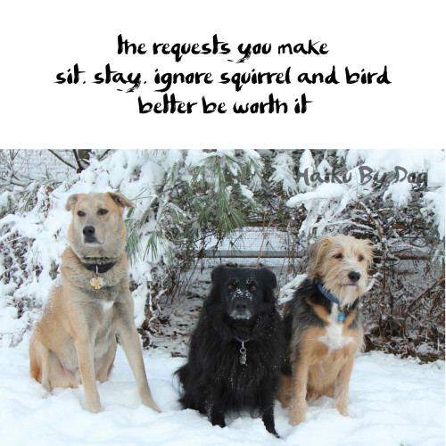 Haiku by dog: the requests you make / sit. stay. ignore squirrel and bird / better be worth it
