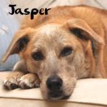 Jasper squre about