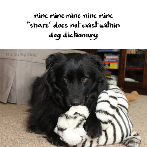 "haiku by dog : mine mine mine mine mine / ""share"" does not exist within / dog dictionary"