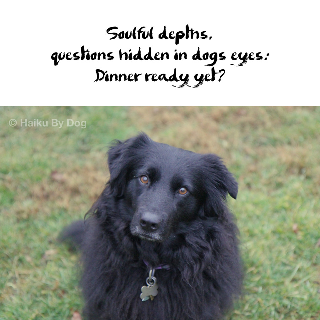 soulful depths / questions hidden in dog's eyes / dinner ready yet?