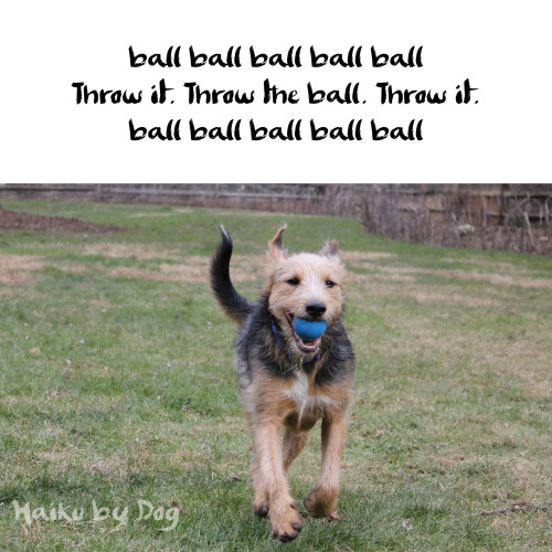 ball ball ball ball ball / Throw it. Throw the ball. Throw it. /