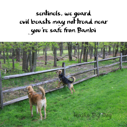 Haiku by Dog: sentinels, we guard / evil beasts may not tread near / you're safe from Bambi