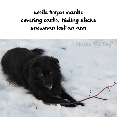 Haiku by Dog: white frozen mantle / covering earth, hiding sticks / snowman lost an arm