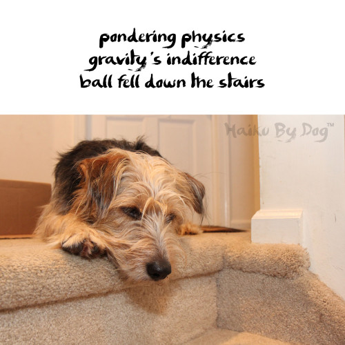 Haiku by Dog: pondering physics / gravity's indifference / ball fell down the stairs