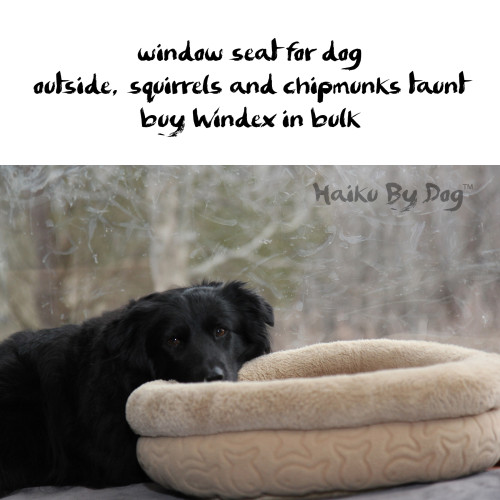 Haiku by Dog: window seat for dog / outside, squirrels and chipmunks taunt / buy Windex in bulk