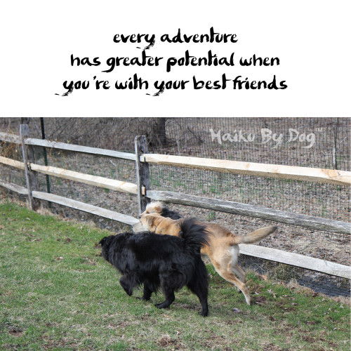 Haiku by Dog: Haiku by Dog: every adventure has greater potential when you're with your best friends