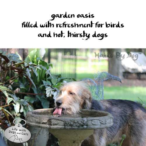 Haiku by Dog: garden oasis / filled with refreshment for birds / and hot, thirsty dogs