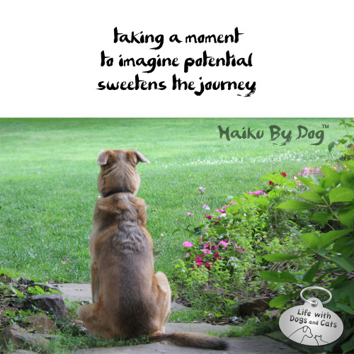 Haiku by Dog: taking a moment / to imagine potential / sweetens the journey