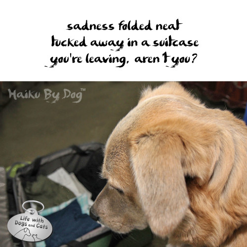 Haiku by Dog: sadness folded neat / tucked away in a suitcase / you're leaving, aren't you?