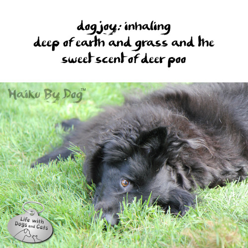 Haiku by Dog: dog joy: inhaling / deep of earth and grass and the  / sweet scent of deer poo