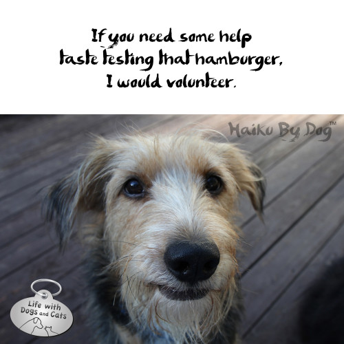 Haiku by Dog: if you need some help / taste testing that hamburger / I would volunteer