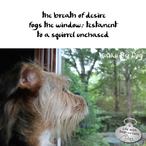 Haiku by Dog: the breath of desire / fogs the window, testament / to a squirrel unchased