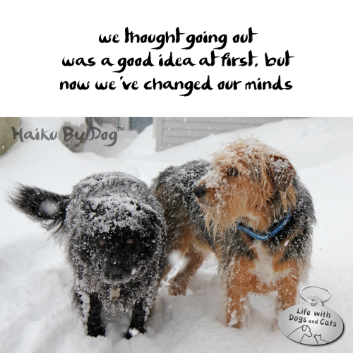Haiku by Dog: we thought going out / was a good idea at first, but / now we've changed our minds