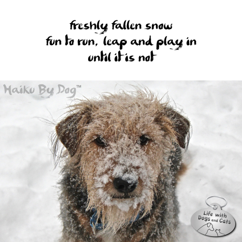 Haiku by Dog: freshly fallen snow / fun to run, leap and play in / until it is not