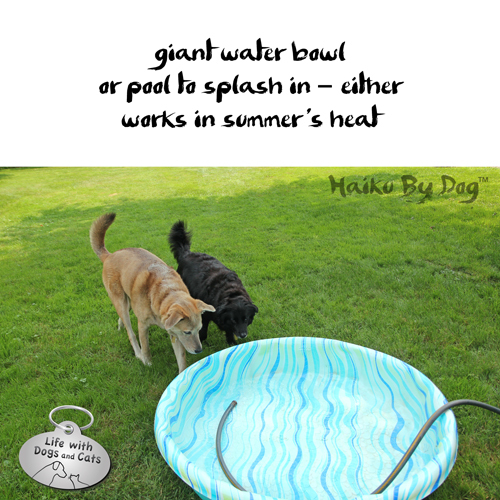 Haiku by Dog: giant water bowl / or pool to splash in --  either / works in summer's heat