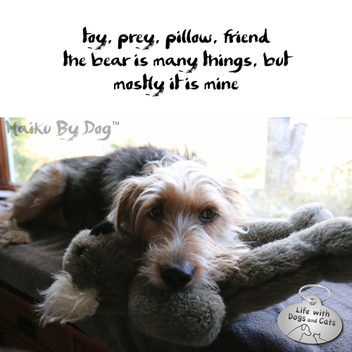 Haiku by Dog: toy, prey, pillow, friend the bear is many things, but mostly it is mine
