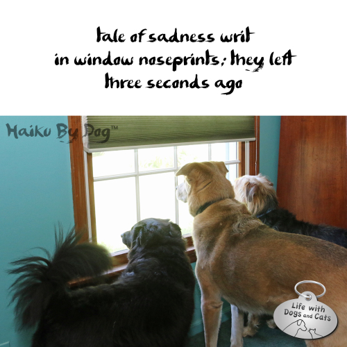 Haiku by Dog: Tale of sadness writ / in window noseprints; they left / three seconds ago