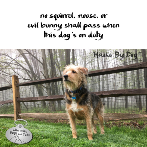 Haiku by Dog: no squirrel, mouse, or / evil bunny shall pass when / this dog's on duty
