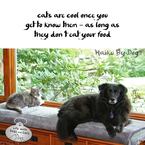 Haiku by Dog: cats are cool once you / get to know them, as long as / they don't eat your food