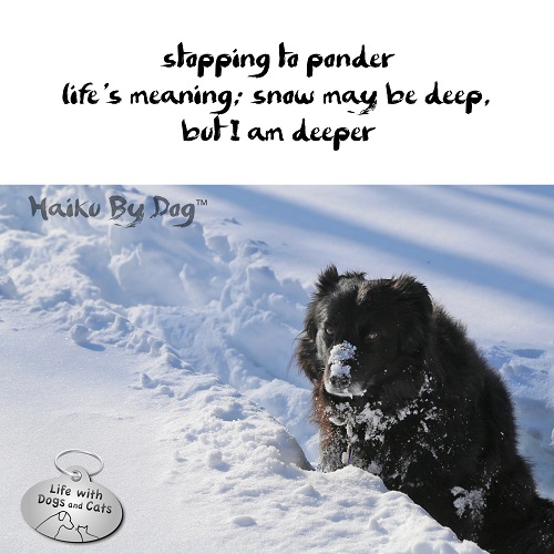 Haiku by Dog: stopping to ponder / life's meaning: snow may be deep, / but I am deeper