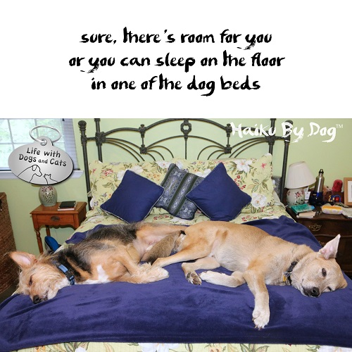 Haiku by Dog: sure, there's room for you / or you can sleep on the floor / in one of the dog beds