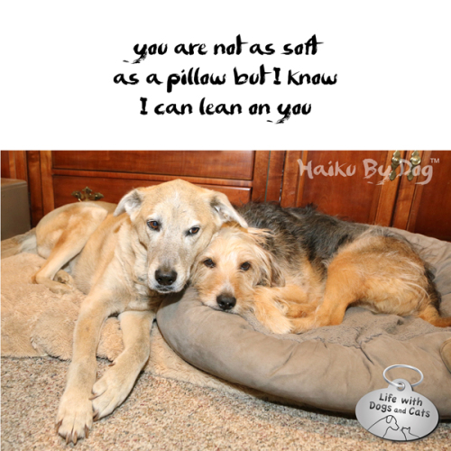 you are not as soft / as a pillow but I know / I can lean on you #HaikuByDog