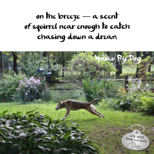 #HaikuByDog On the breeze, a scent / of squirrel near enough to catch / chasing down a dream