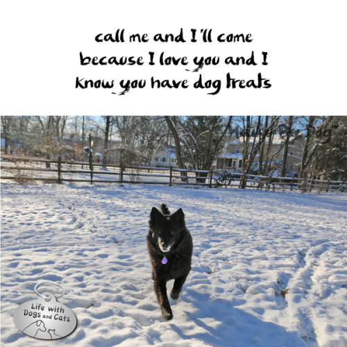 #HaikuByDog: call me and I'll come / because I love you and I / know you have dog treats