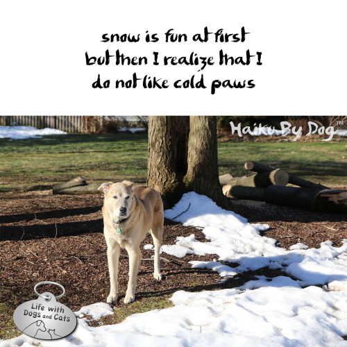 snow is fun at first / but then I realize that I / do not like cold paws