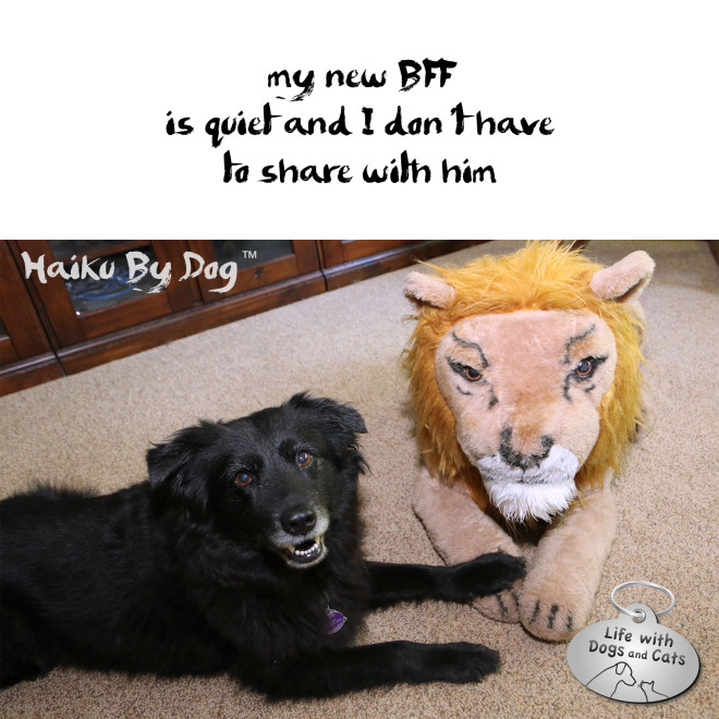 #HaikuByDog my new BFF is quiet and I don't have to share with him