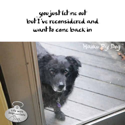 #HaikuByDog  you just let me out / but I've reconsidered and / want to come back in