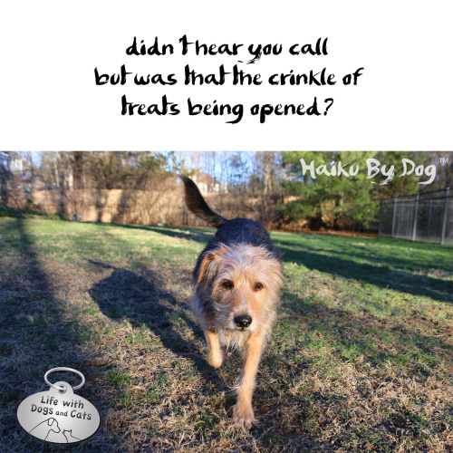 #HaikuByDog didn't hear you call / but was that the crinkle of / treats being opened?
